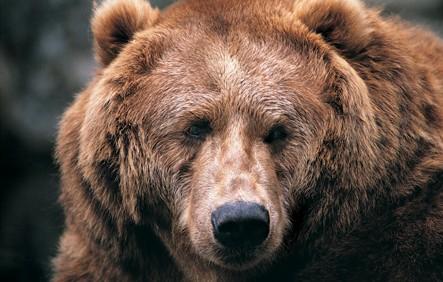 Smeđi medvjedi i čovjek – suživot sa strahopoštovanjem