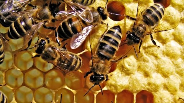 I dalje se ne zna uzrok pomora pčela u Međimurju