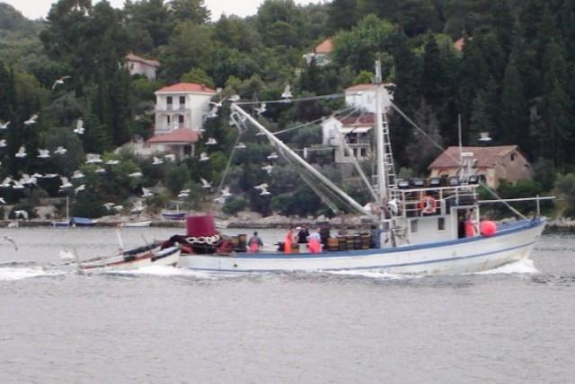 Kako zaštititi malu plavu ribu u Jadranu?