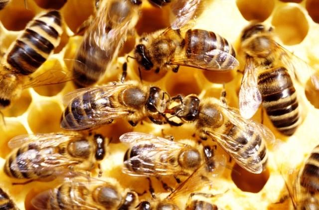 Prvi bečki dan pčela u gradskoj vijećnici