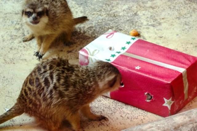 Djed Božićnjak će posjetiti i Zoološki vrt u Zagrebu