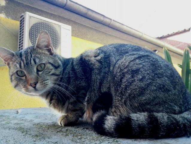Mačka dobila zahvalnicu jer je pomogla u operaciji spašavanja