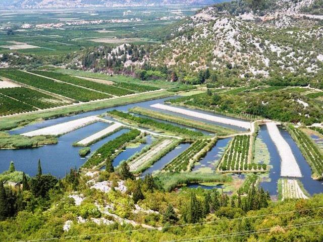 Zlatni kivi u dolini Neretve budućnost juga Hrvatske