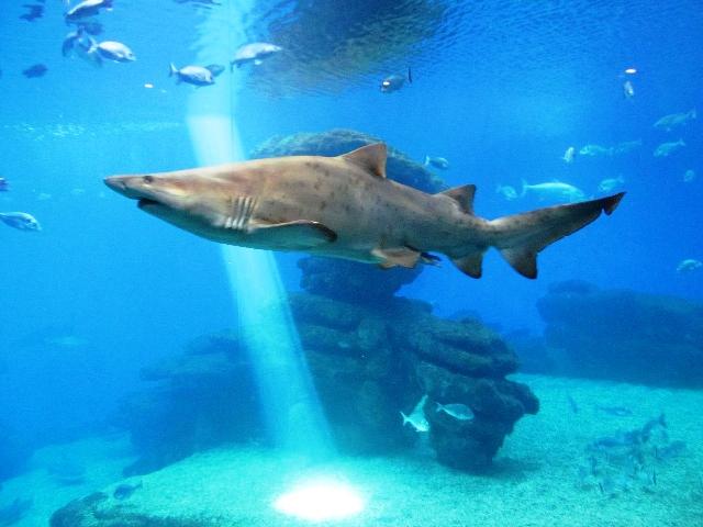 U pulski Aquarium stižu morski psi