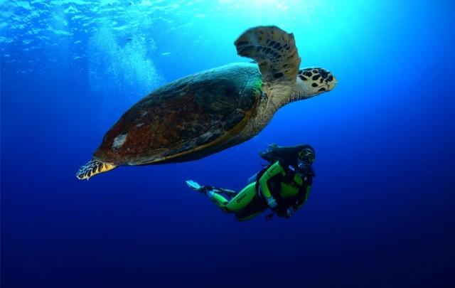 """Izložba podvodnih  fotografija """"Plavi svijet"""" i """"Tajne podzemlja"""""""