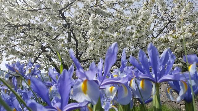 Prvi je dan proljeća!