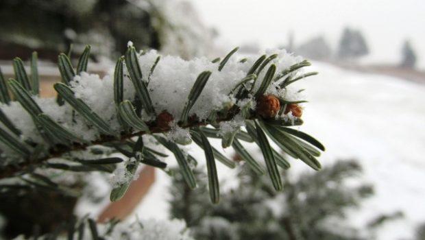 Snijeg, KIGO.hr