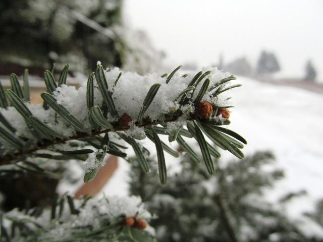 U Gorskom kotaru u Subotu snijeg