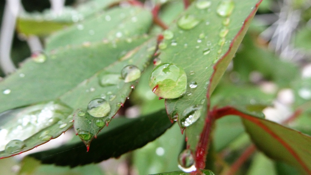 Nedjelja: oblačnije, toplije, južina, ponegdje i kiša