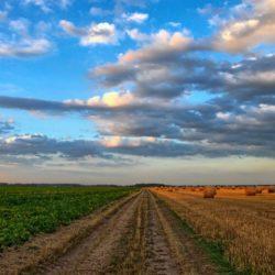 Počinje isplata prve rate izravnih potpora poljoprivrednicima