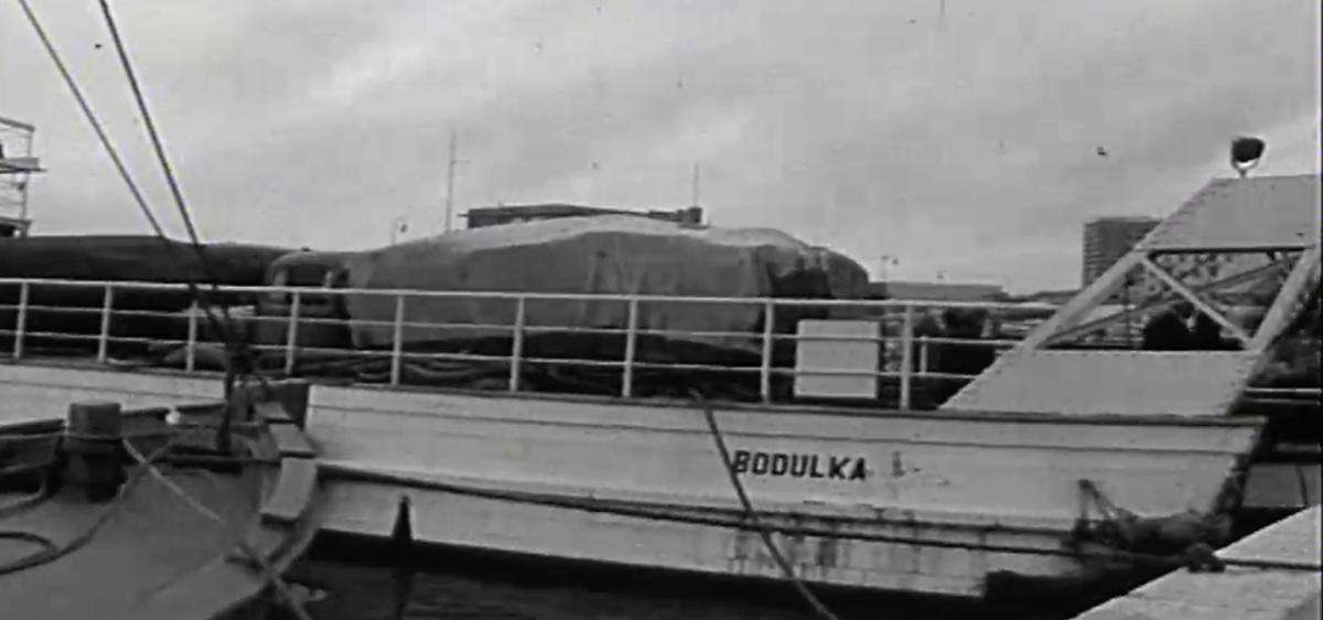 12. travnja 1959. – Zaplovio prvi trajekt u Hrvatskoj