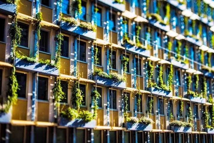 Ozelenjavanjem fasada do nižih temperatura u gradu