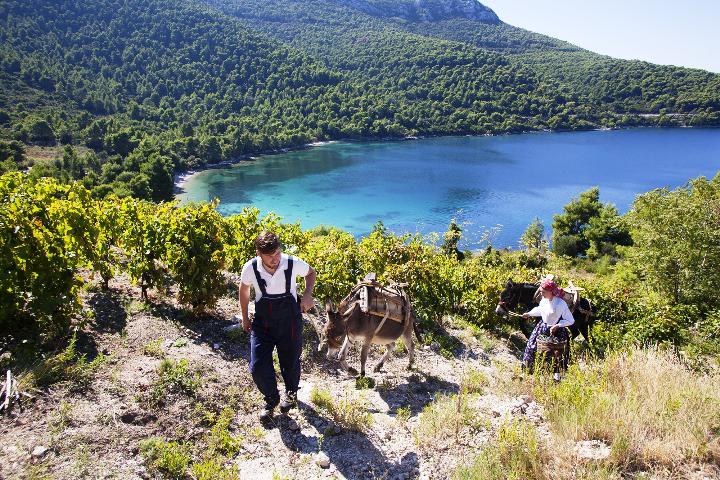 Kad vina svjedoče o ljepoti dalmatinskog juga