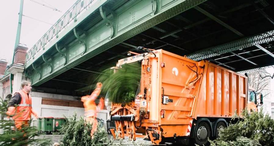 Beč: Božićna drvca kao važan izvor energije