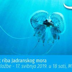 """Otvorenje izložbe """"Raznolikost riba Jadranskog mora"""" povodom Međunarodnog dana muzeja"""