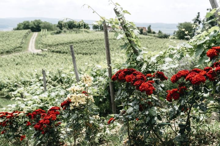 Preporuka za izlet – zelena priča iz srca Slavonije