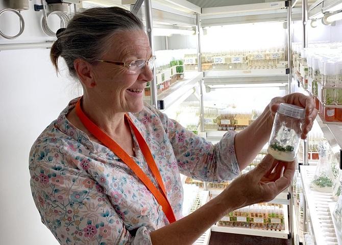 Bečki znanstvenici 'oživili' biljku staru 32 tisuće godina