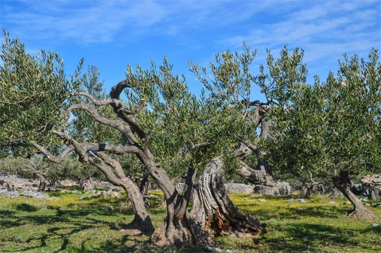 U Supetru uz investiciju od 2 milijuna eura otvoren kamp Bunja