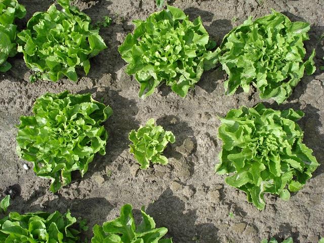 Prirodan hidrogel kao ekološko rješenje za suše