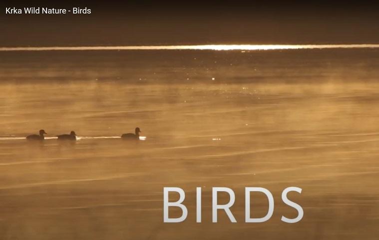 """Pretposljednji dokumentarni film iz ciklusa Divlji svijet Nacionalnog parka """"Krka""""  vodi nas nebu pod oblake da upoznamo ptice"""