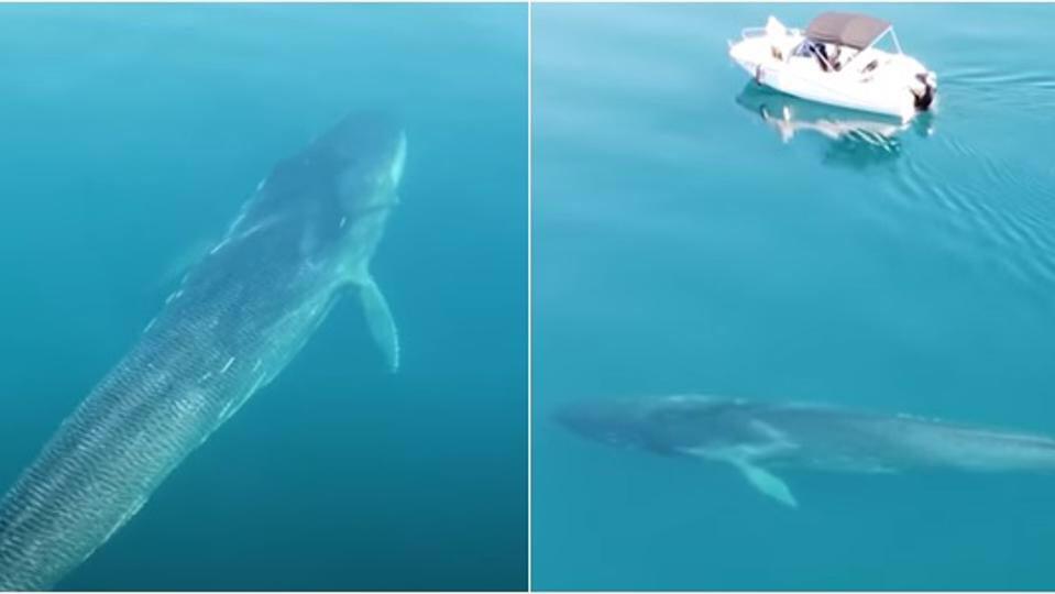 Šok! Veliki kit kod Novskog ždrila!